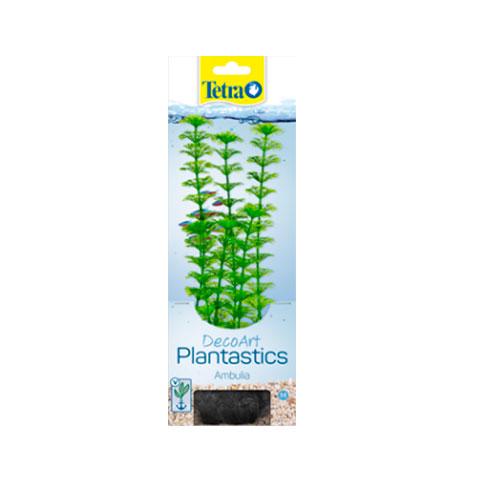 Tetra растение Ambulia